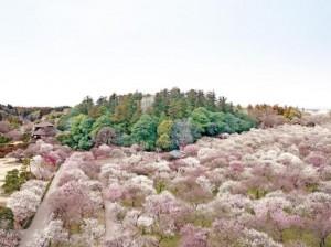 梅香る茨城の春を満喫【水戸の梅まつり】2/20より開催