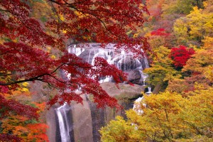 紅葉の季節がやってきました!!
