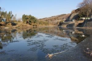 今シーズンも久慈川に大物のシガ(※氷花)が流れました!!