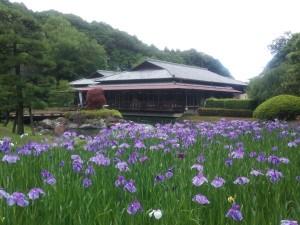 〔常陸太田市〕桃源 花菖蒲まつり 2013(6/8~6/30)