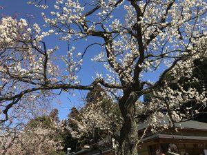 袋田温泉 思い出浪漫館 偕楽園梅まつりに行ってきました